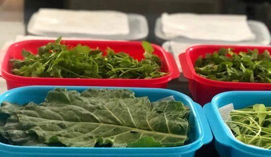 dica para armazenar folhas na geladeira